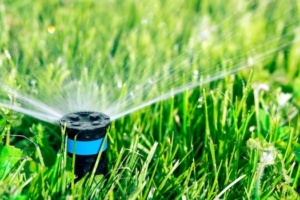 Smart Landscaping to Reduce Your Water Use